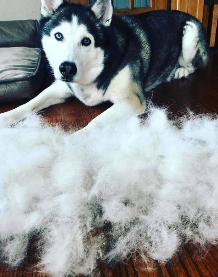 Shedding-Dog-Challenge-Facebook