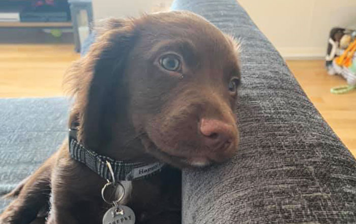 People Are Posting Their Dog's Happiest Expressions For The 'Smiling Dog' Challenge (30 Pics)