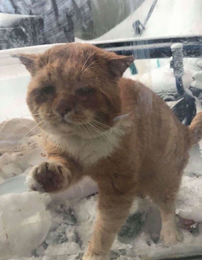 stray-cat-knocks-on-door-foster-rescue-1-1-5fed83672a430__700.jpg