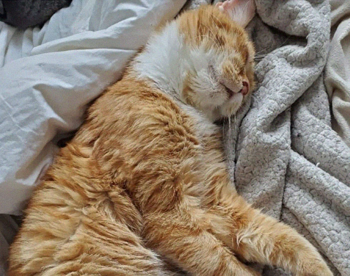 stray-cat-knocks-on-door-foster-rescue-1-12-5fed837841885__700.jpg
