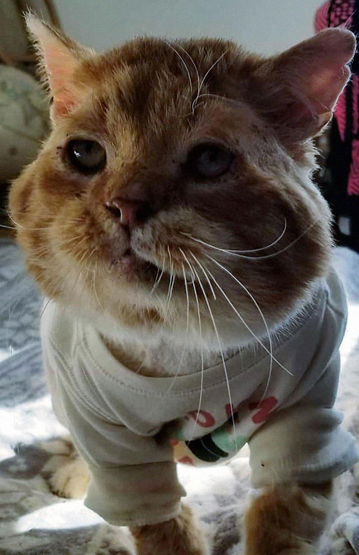stray-cat-knocks-on-door-foster-rescue-1-8-5fed8371beb95__700.jpg