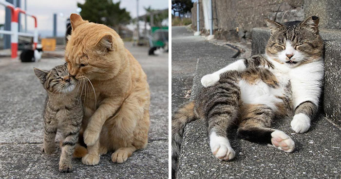 40 Unique Personalities Of Stray Cats As Captured By This Japanese Photographer (New Pics)
