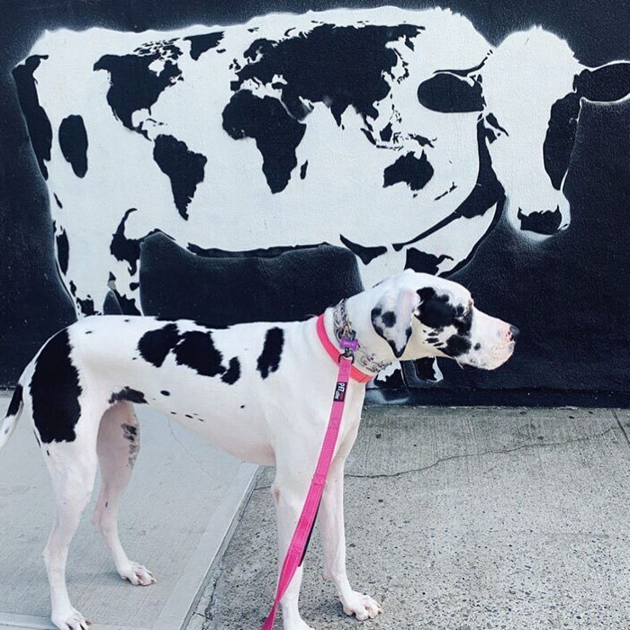 World Cow: Our 30 Pictures That Promote Positivity And Love All Around The World