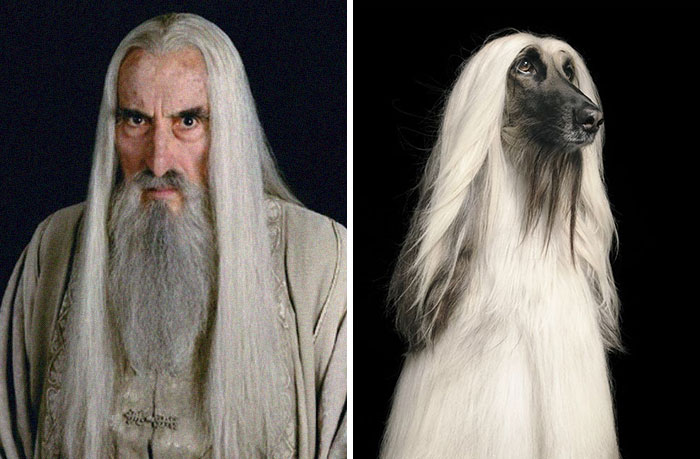 What If Lord Of The Rings Was All Dogs? This Twitter Thread Has An Answer (18 Pics)