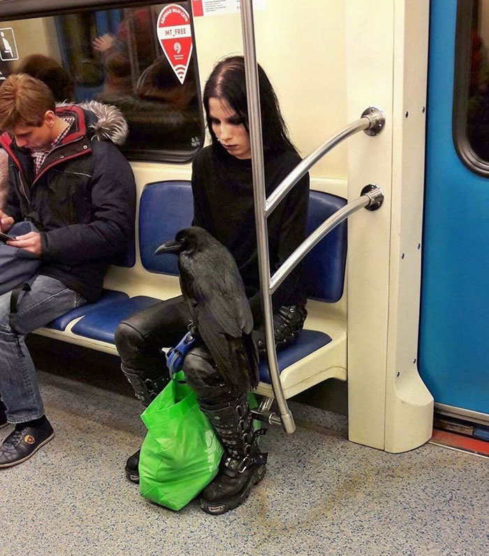 A Girl And Her Raven On The Running Subway