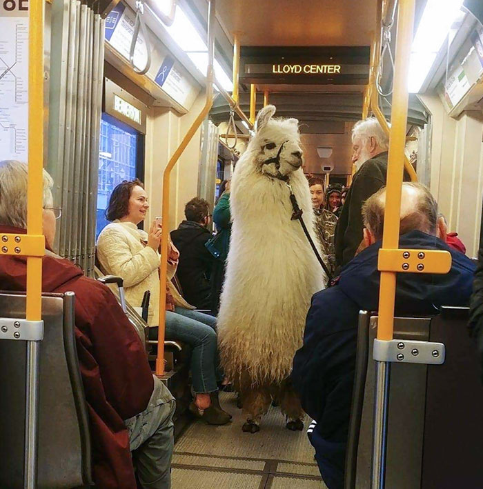 So Apparently We Are Bringing Llamas On The Max Now. I Guess Alpaca Bit Of Extra Snacks With Me Next Time