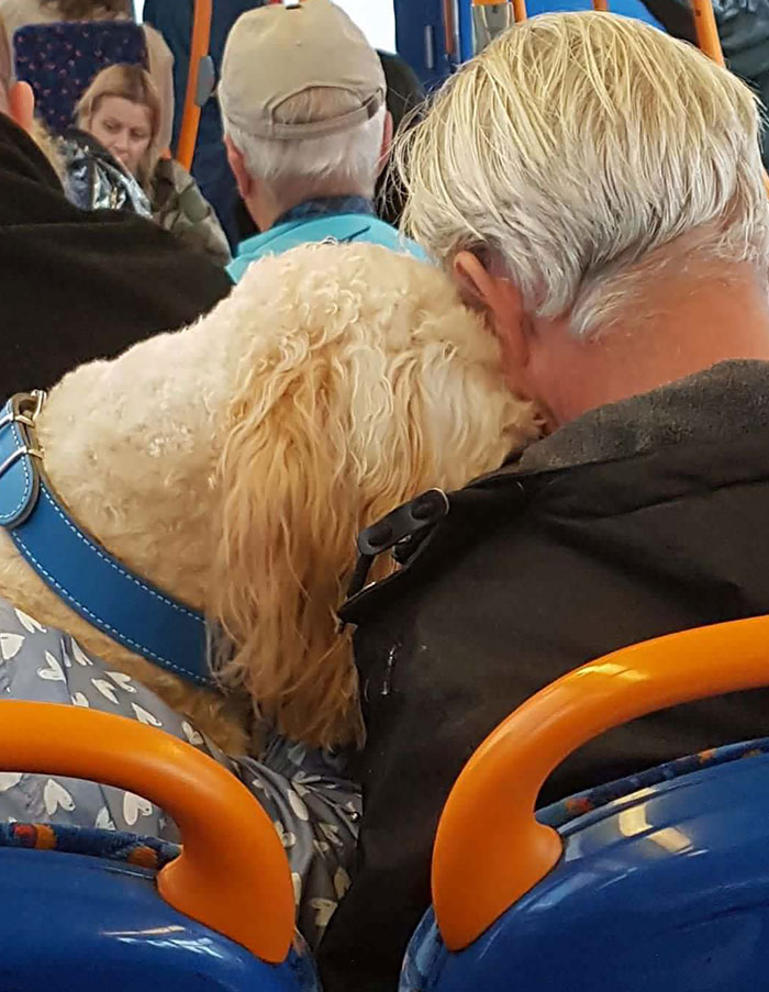 Two Old Best Friends Having A Little Snooze On The Bus