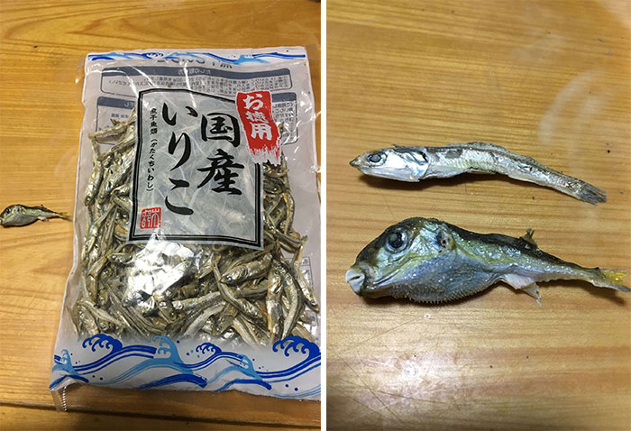 Pez fugu, muy venenoso, ahora gratis en tu bolsa de anchoas secas
