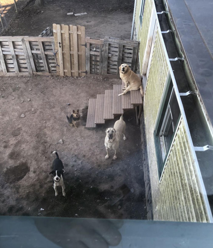 Sometimes I Throw Doggy Treats To My Landlords Dogs Out Of My Window, This Is Now What I See When I Look Out My Window