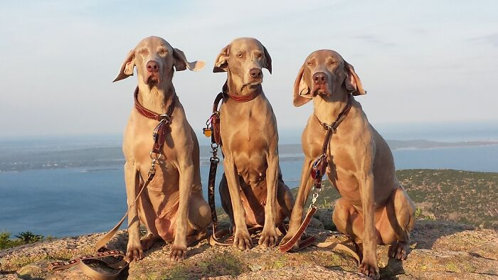 Wellington, Winslow And Wolfgang A Few Years Back. We Miss You Winnie...