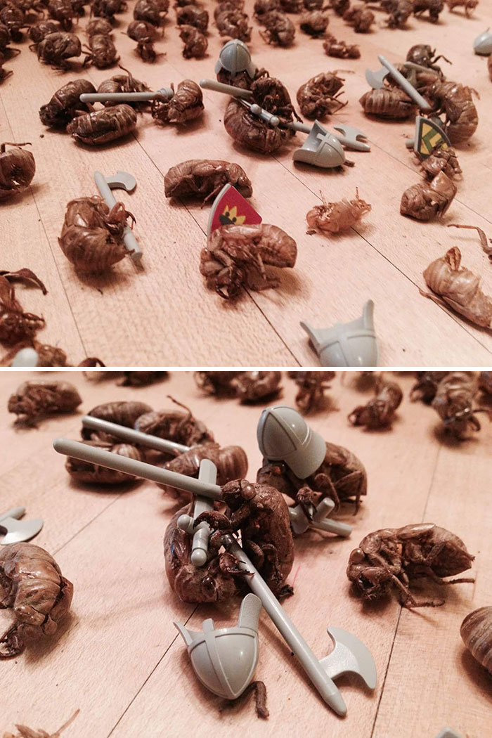 Someone On My Facebook Feed Has Been Collecting Cicada Shells So She Can Pose Them In Battle Scenes