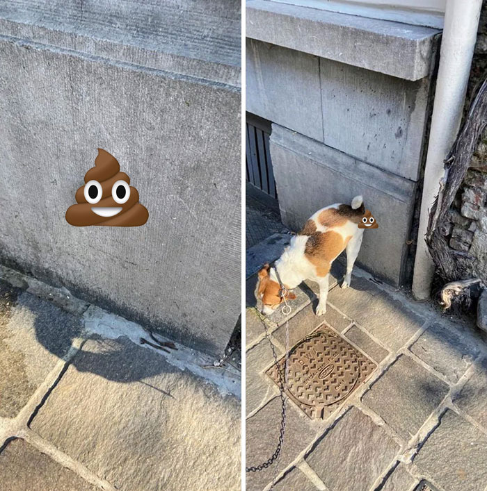 The Way My Dog Poops On Walls
