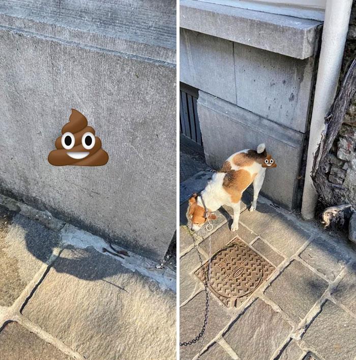 Mi perro hace caca en las paredes