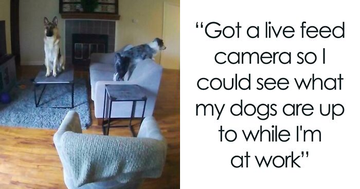 """""""What's Wrong With Your Dog?"""": People Are Posting Pictures Of 'Malfunctioning' Dogs (47 Pics)"""