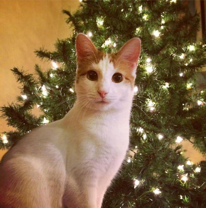 Henrietta Loves Christmas Lights