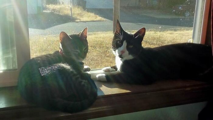 Athena (Tabby) & Nox (Tuxedo) - Adopted Them Three Months Apart Earlier This Year, And Every Day During The Summer This Is How They Spent Their Days