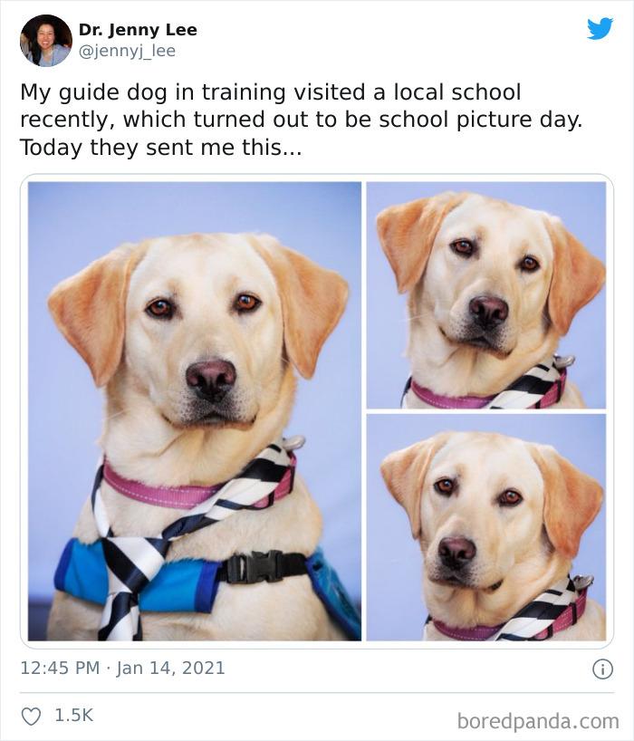Estoy entrenando a un perro guía, y hace poco visitamos un colegio, donde resultó ser el día de las fotos. Hoy me han enviado esto...