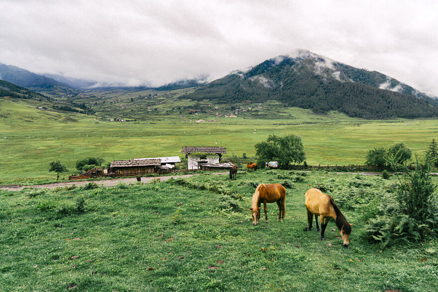 The Pobjica Valley Is A Place Where Grazing Cows And Horses Live A Carefree Life.