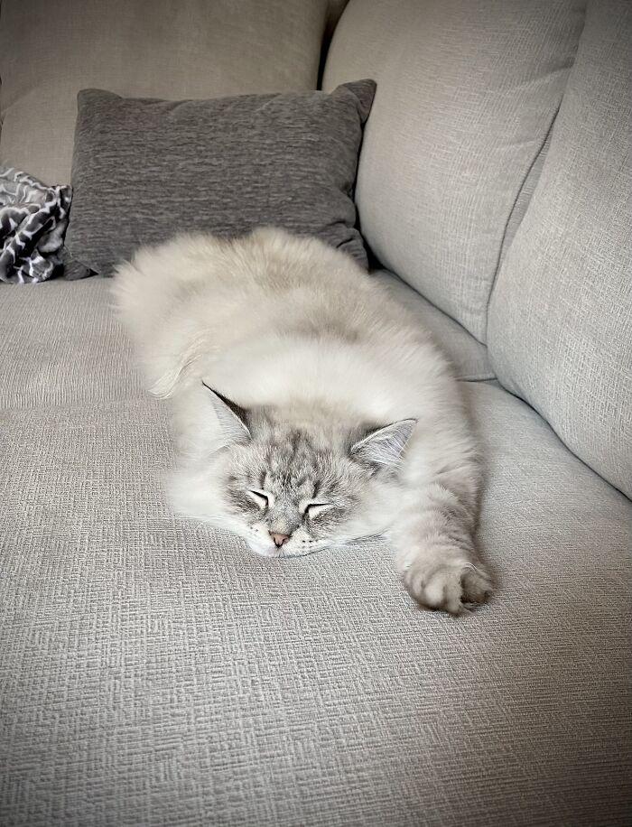 Flat Kitty!