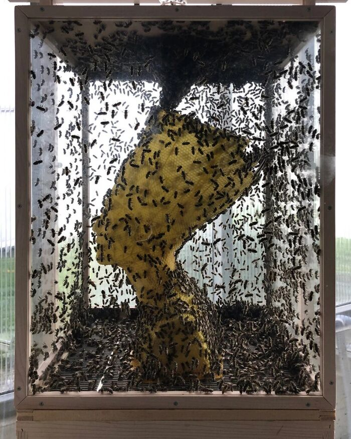 Artist Sculpts Beeswax Bust Of Nefertiti With Help Of 60,000 Honeybees, Is Selling It For $46k