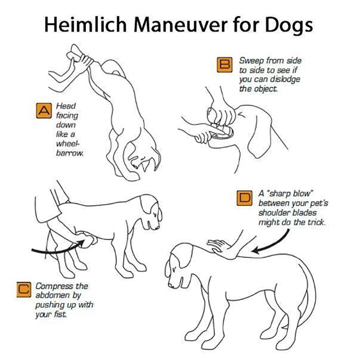 How To Save A Choking Dog