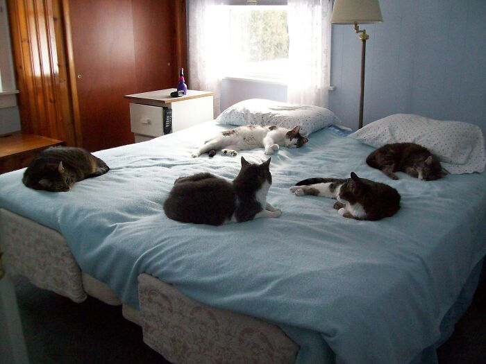 No Room On The Bed--They All Came As Fosters, And None Of Them Ever Left. They Lived With Us Forever.