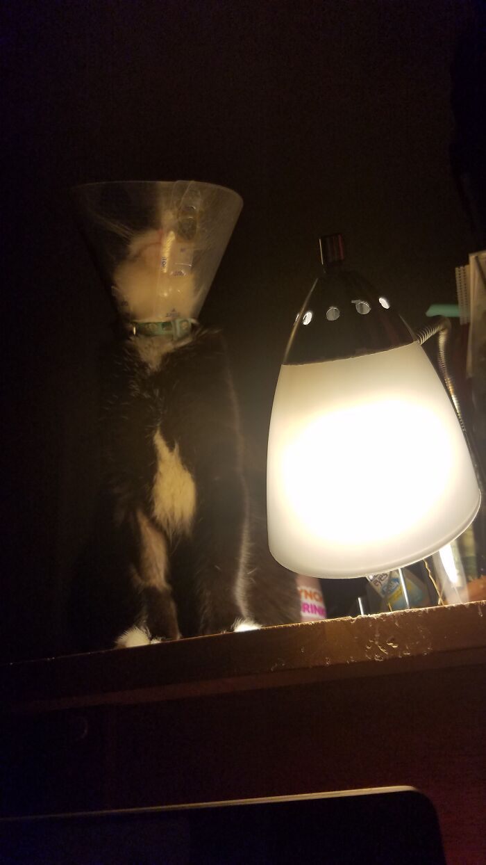 Pretending To Be A Lamp