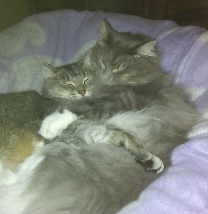 Another One Of My Lucy & Toby... He's A Fluffy Rag-Doll & She Loves A Snuggle In The Winter!