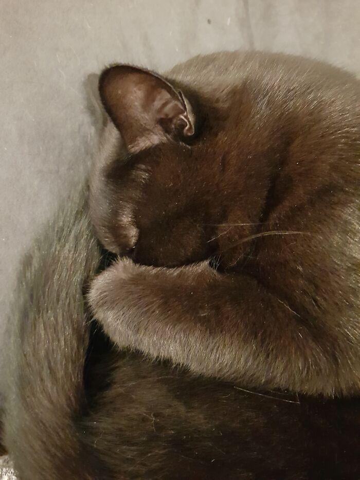 Sleeping Like A Squirrel...