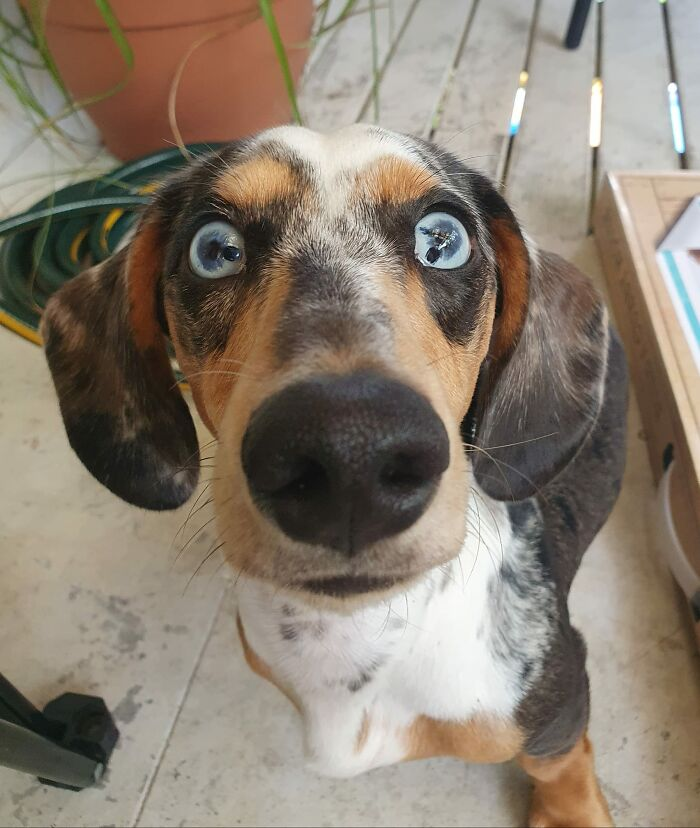 Dogs-Pretty-Eyes-Challenge-Facebook