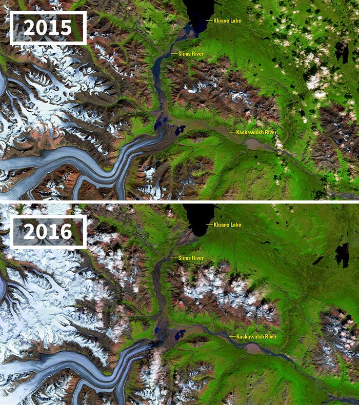 Kaskawulsh Glacier Meltwater Alters Downstream Ecosystems