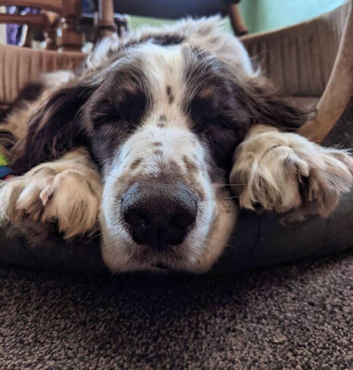 Пожилая больная собака
