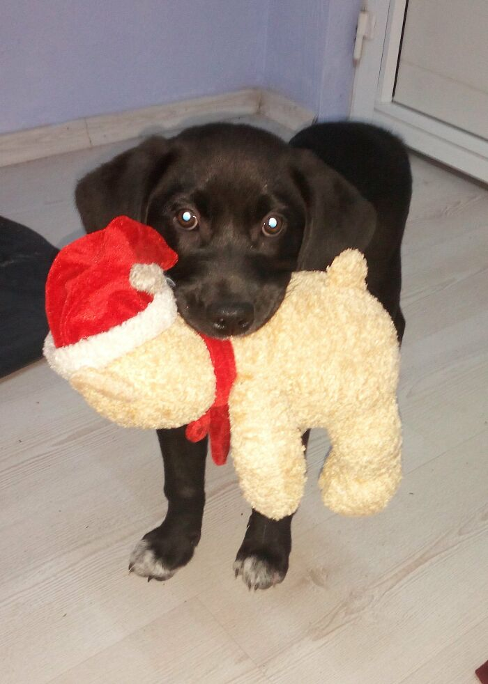 Mocka With Her Christmas Gift