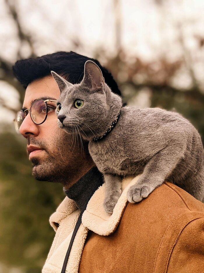 My Dreams Of Having A Shoulder Cat Have Come True