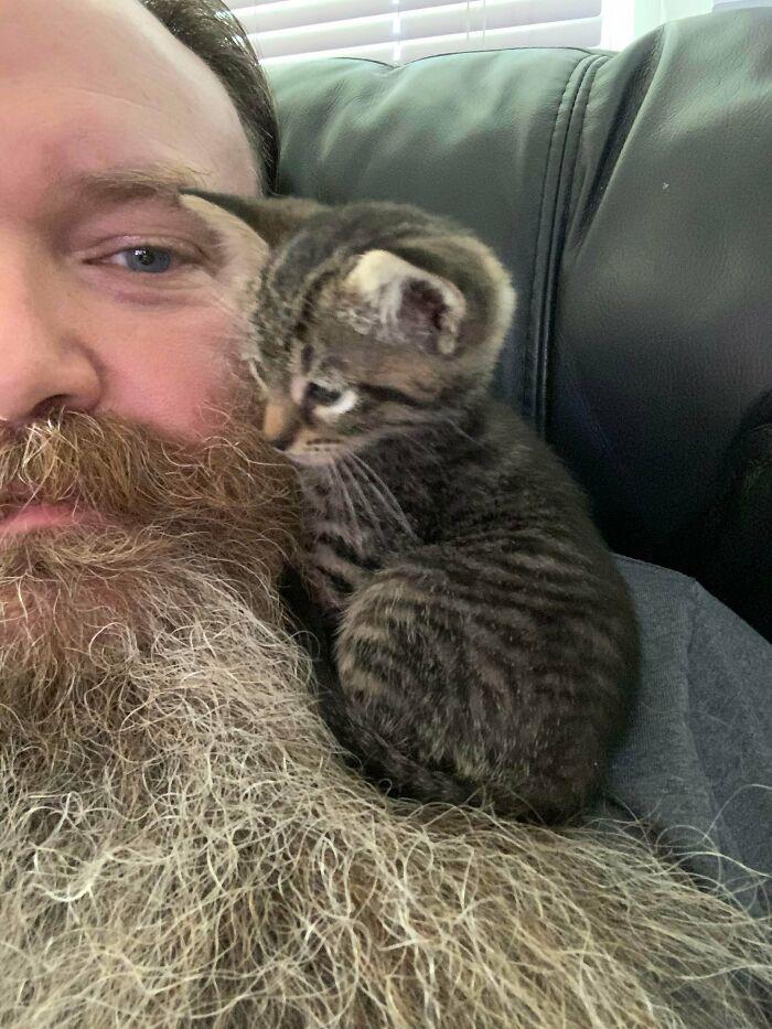 Veo Vuestros Gatos De Hombro Y Lo Subo A Gato De Barba