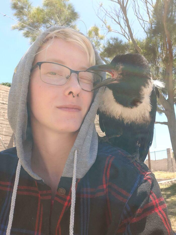 Los Animales De Hombro Parecen Ser Bastante Populares Hoy En Día. ¡Así Que Aquí Va Un Cuervo De Hombro!