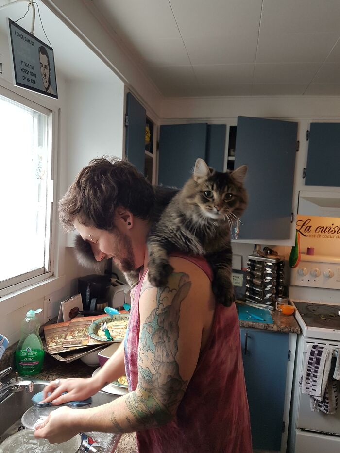We Raised A Shoulder Cat