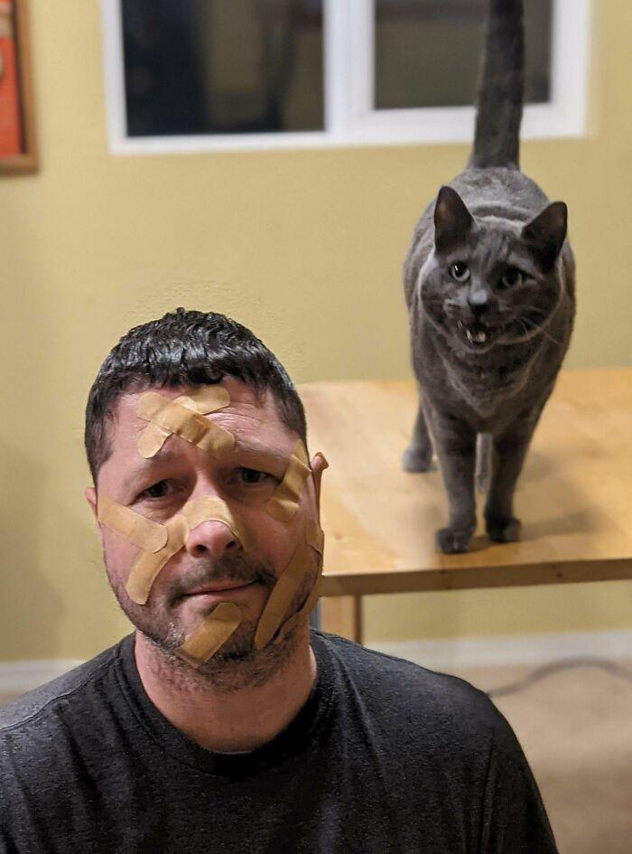 El Gato De Hombro Será Divertido, Dijeron