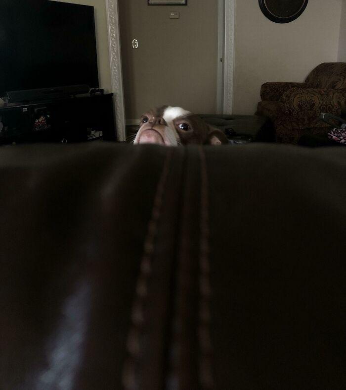 Observando desde el sofá