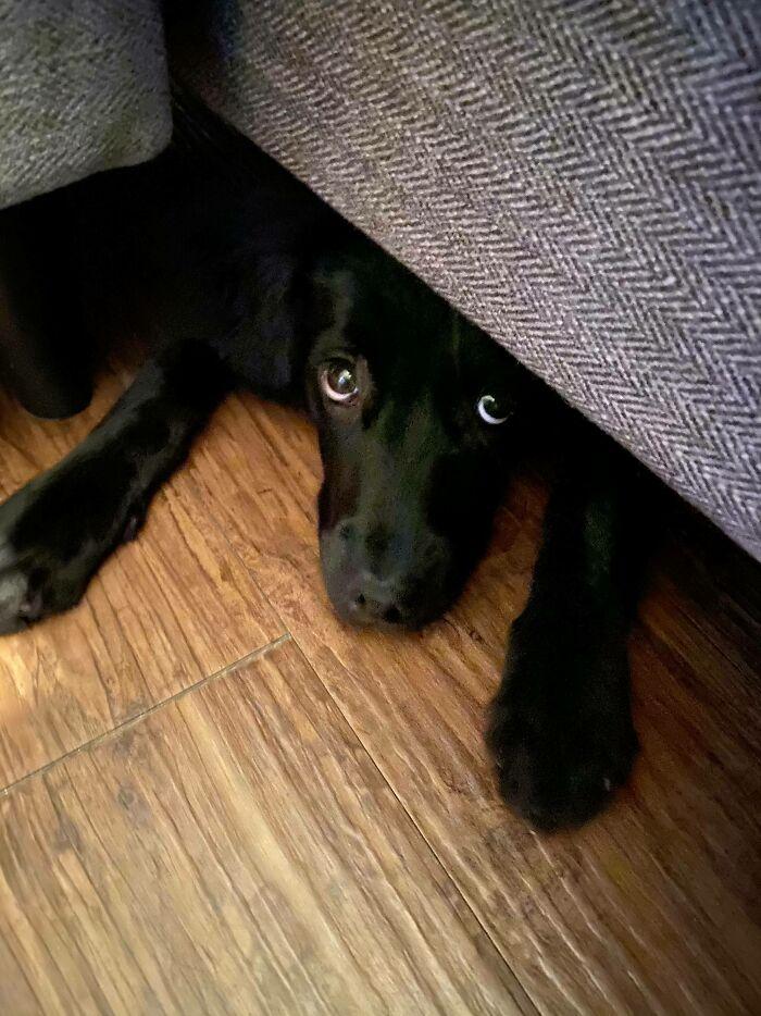 Espiando desde debajo del sofá