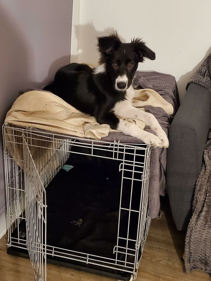 I Don't Think He Fully Understands The Crate