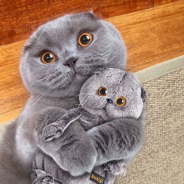 This Cat Has A Plush Of Itself