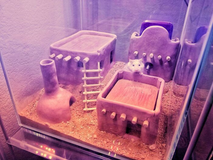 I Made A Pueblo Out Of Clay For My Roborovski Hamster