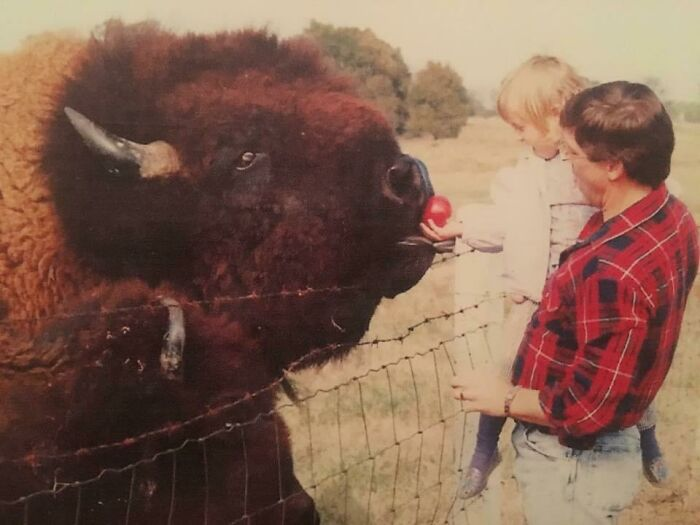 My Dad Used To Take Me To Feed The Buffalo Outside Of Town When I Was Little. We Called This Guy Big Daddy