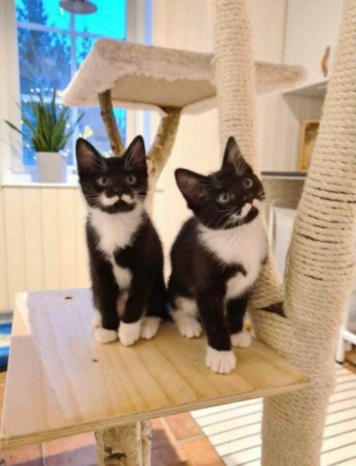 These Kittens With Perfect Moustache Patterns