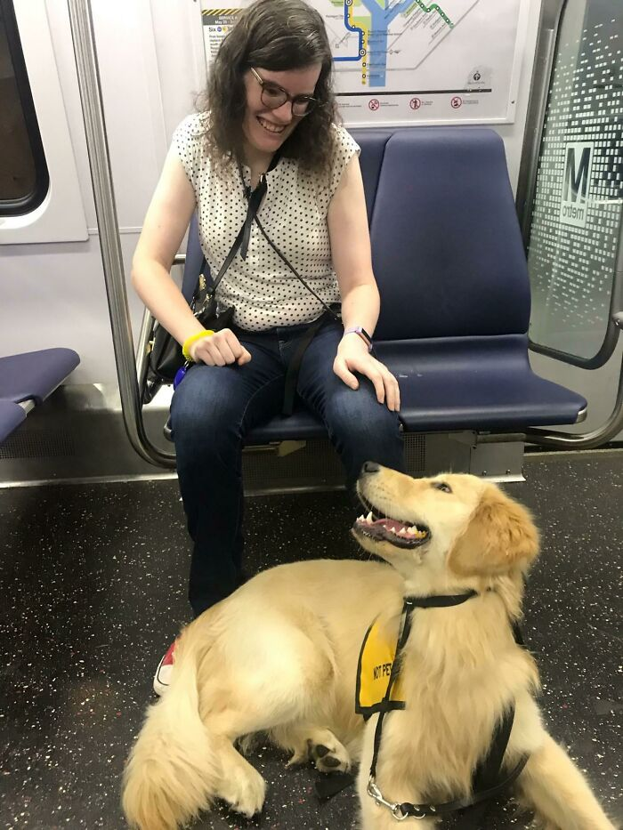 My Good Boi And Service Animal In Training, Nigel, Enjoying His First Practice Ride On The Metro