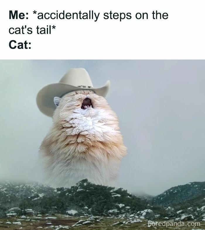 *cries In Cat*