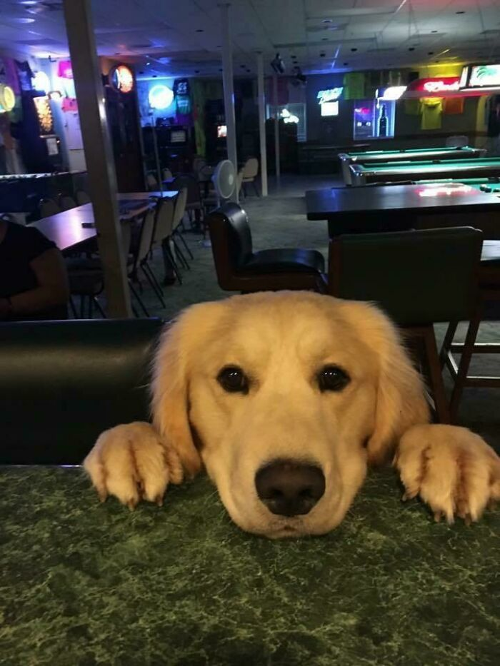 Ted quería patatas fritas en el bar