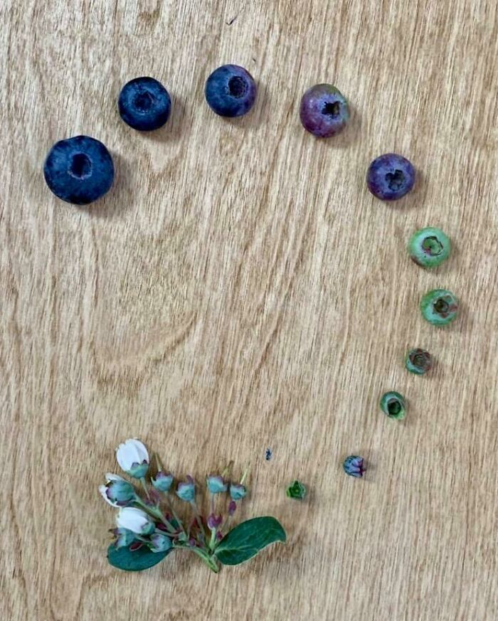 My Dad Sent Over The Blueberry Cycle