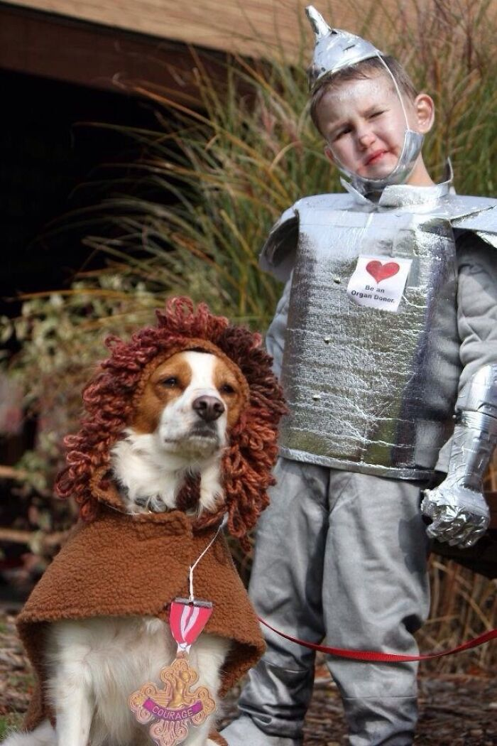 Our Son Had A Heart Transplant. My Wife Made Him A Tin Man Costume. Cowardly Lion Played By Murphy Jenkins